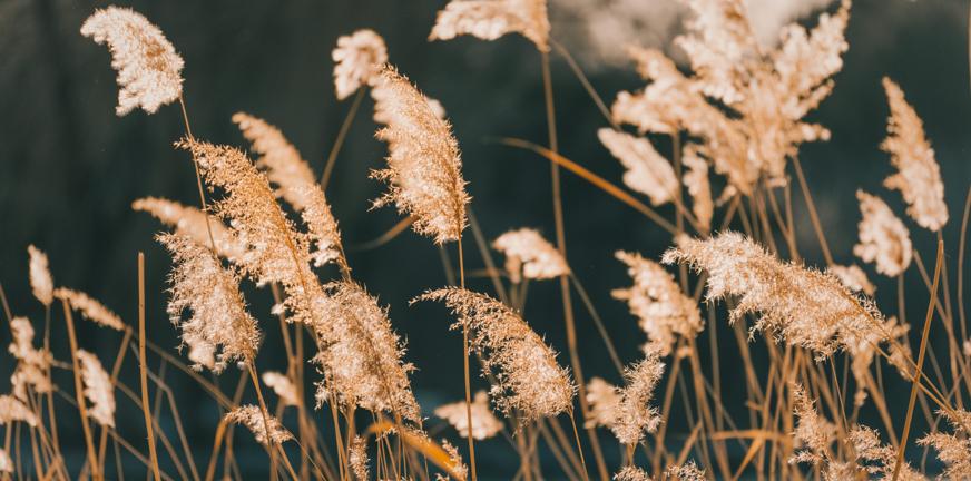 Blog Over hoop, heling en herstel na een psychose