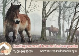 Paardencoaching - 03
