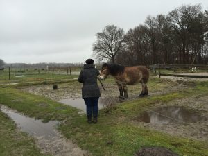 Paardencoaching - 14