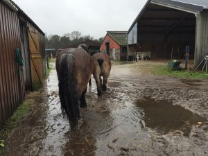 Paardencoaching - 17