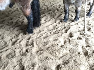 Paardencoaching - 11