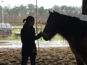 Paardencoaching - 13