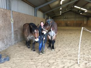 Paardencoaching - 10