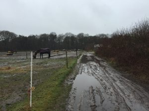 Paardencoaching - 05