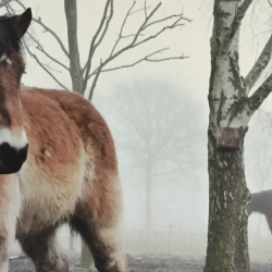 Misty paardencoaching