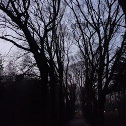 bomen kloet