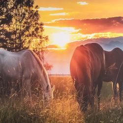 Blog paardencoaching