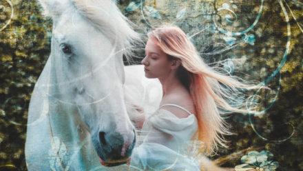 Blog Paardencoaching Mieke