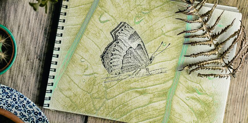 Blog vlinder