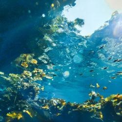 De juiste bril voor een vis in de oceaan